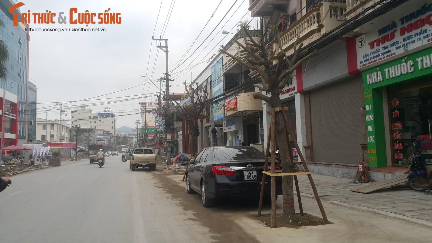 """Ky la hang cay xanh trong """"duoi long duong"""" o Uong Bi-Hinh-18"""