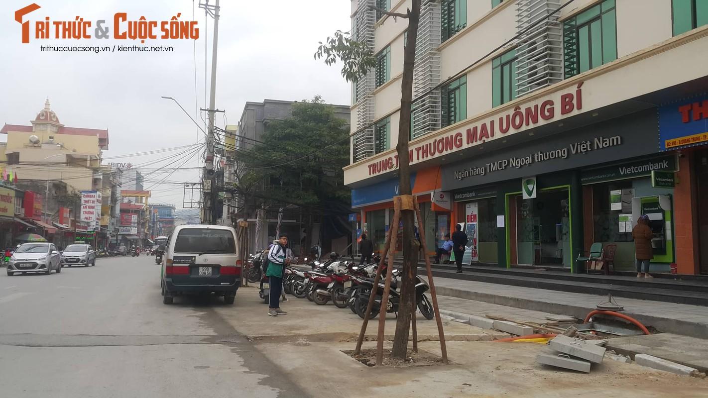 """Ky la hang cay xanh trong """"duoi long duong"""" o Uong Bi-Hinh-2"""