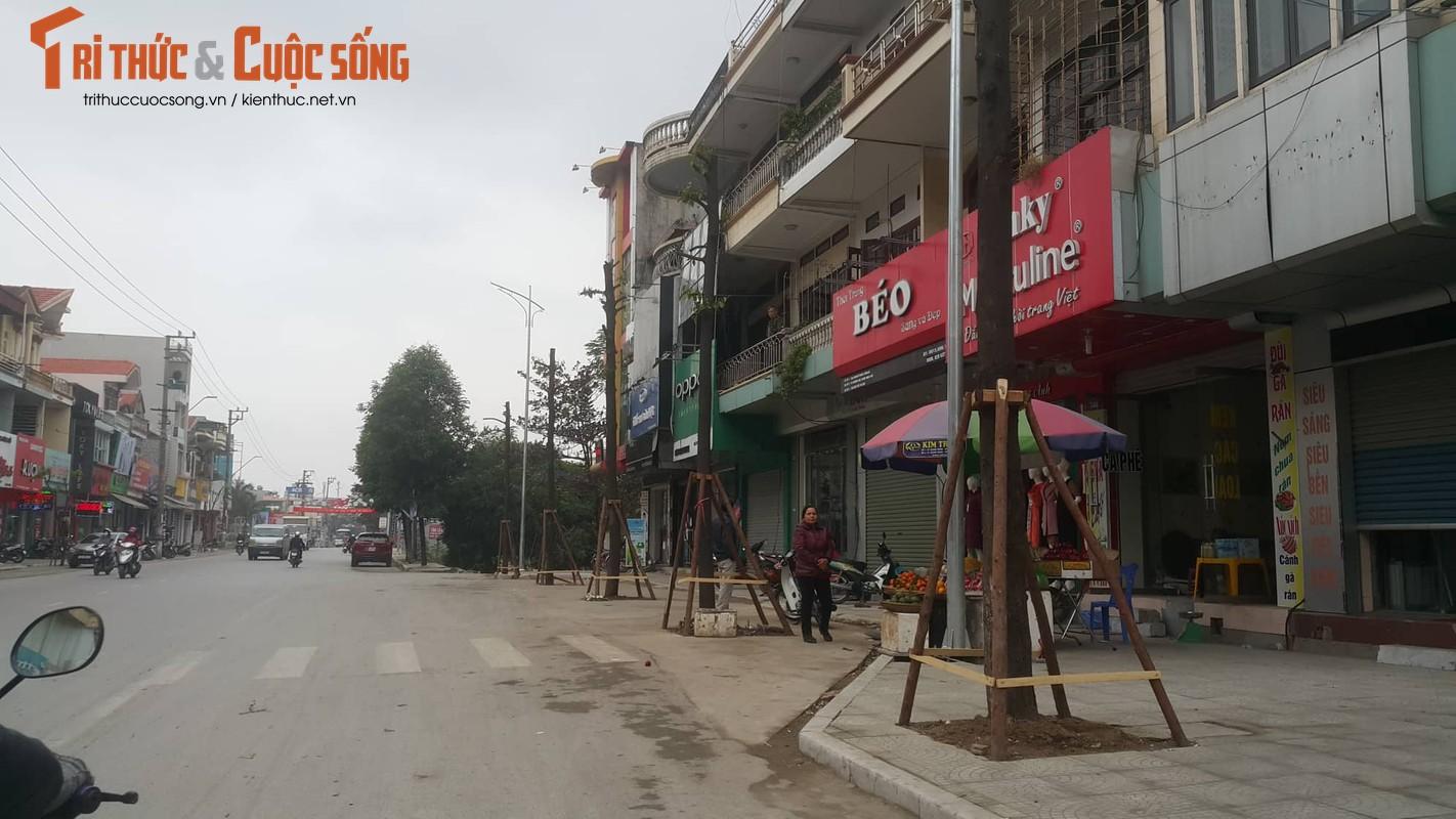"""Ky la hang cay xanh trong """"duoi long duong"""" o Uong Bi-Hinh-20"""