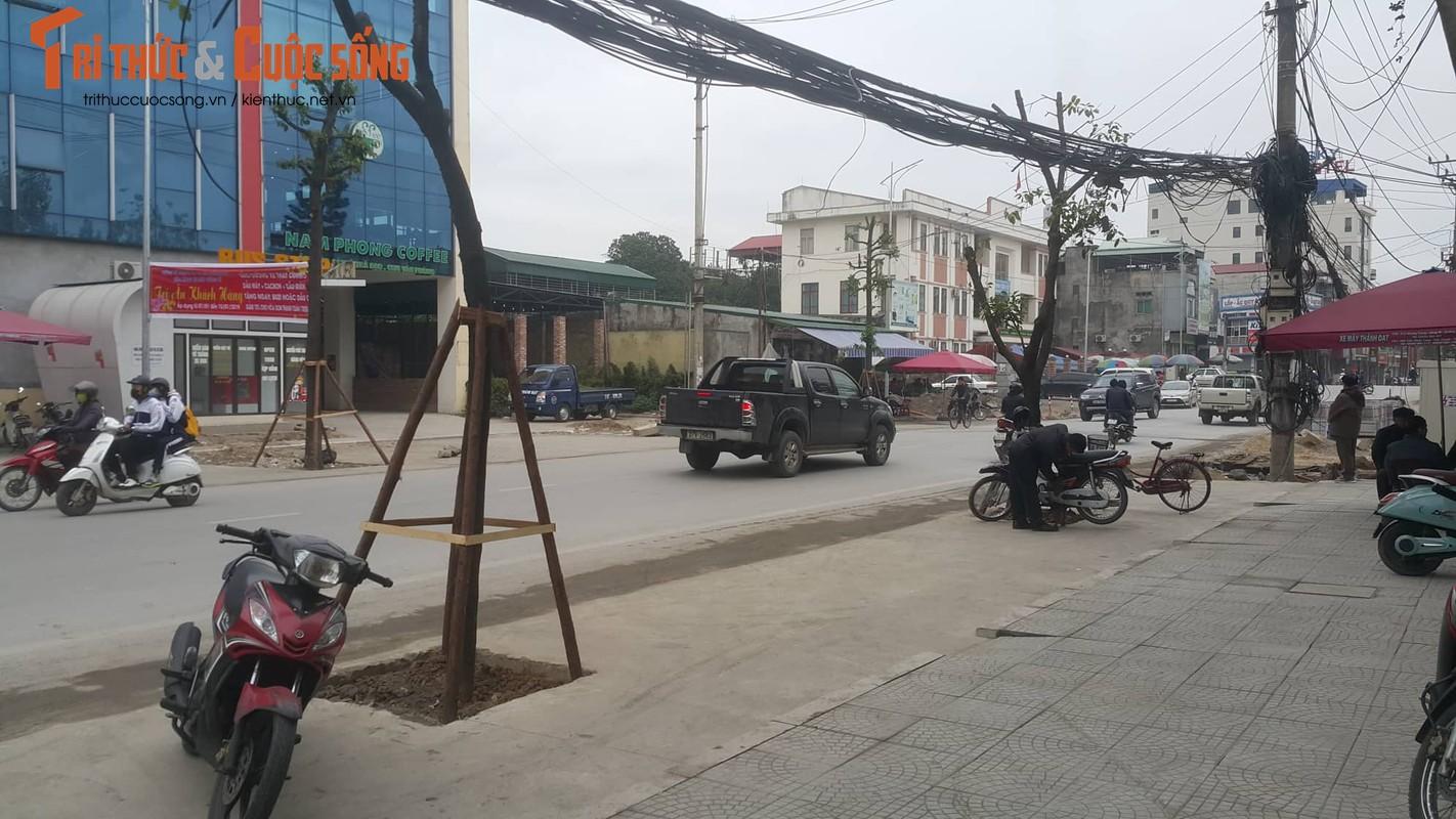 """Ky la hang cay xanh trong """"duoi long duong"""" o Uong Bi-Hinh-7"""