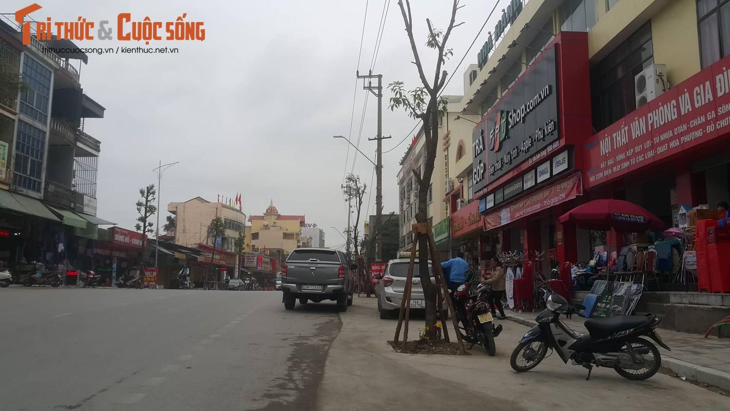 """Ky la hang cay xanh trong """"duoi long duong"""" o Uong Bi"""