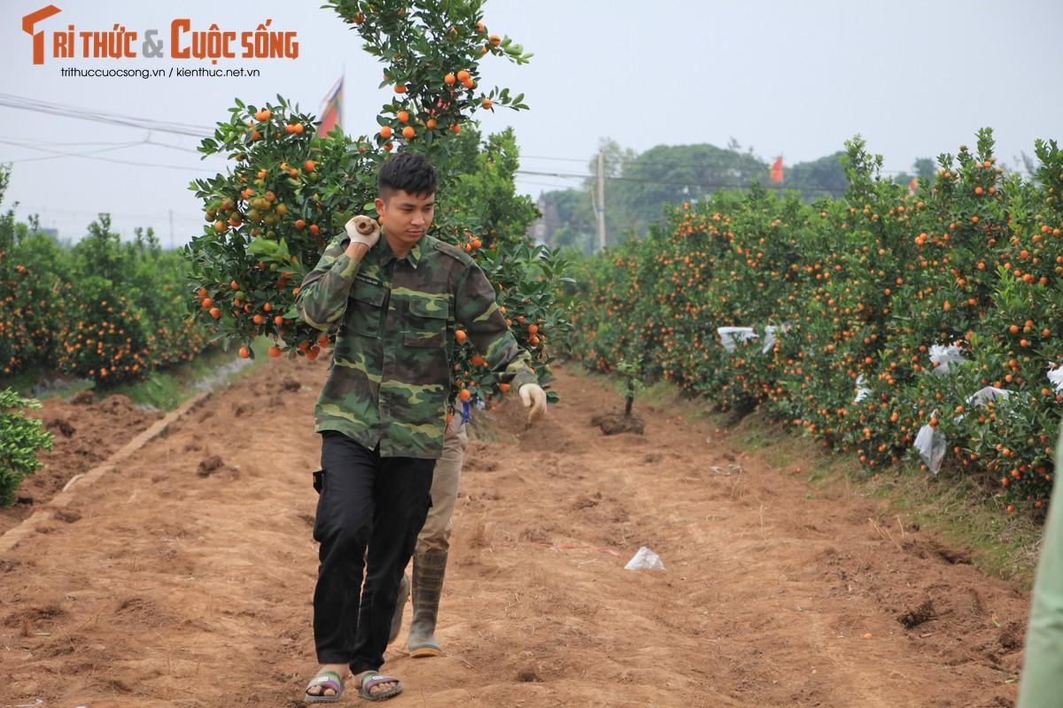 "Vua quat lon nhat mien Bac khon kho vi bi thuong lai ""bung"" hang-Hinh-6"