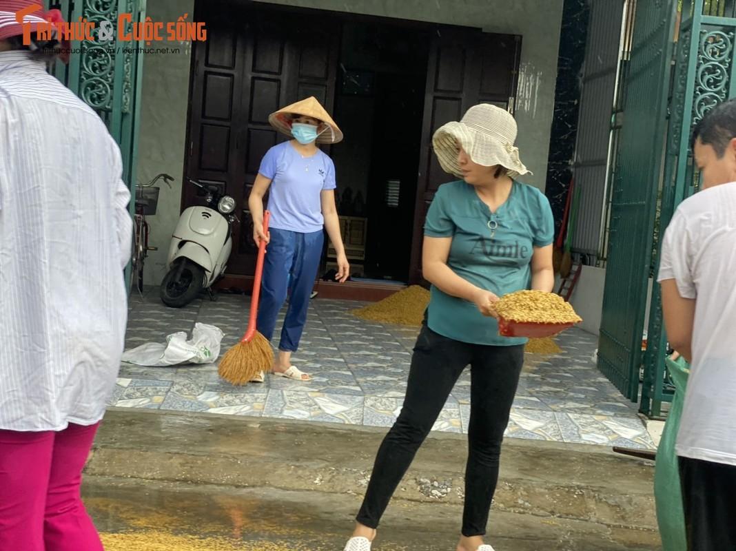 """Nong dan Hai Hau """"khoc rong"""" vi  thoc lua phoi ngoai duong ngap ngua trong mua-Hinh-9"""