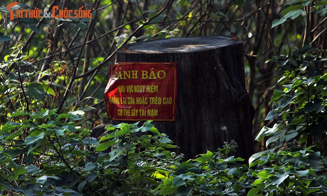 Anh: Lo ngai hoa hoan o dong go muc kho tai cong vien Tuoi tre-Hinh-11