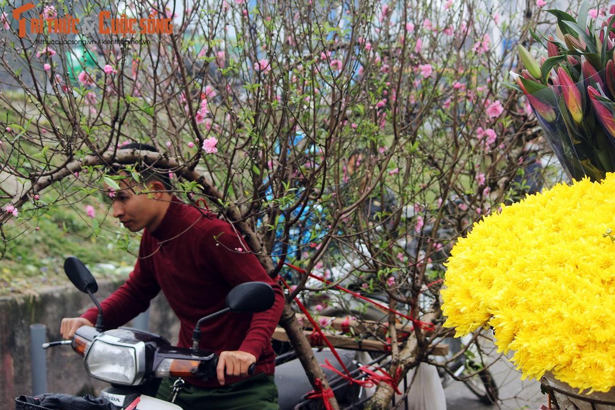 Anh: Cho Quang An tran ngap hoa dao ngay can Tet Nguyen dan 2019-Hinh-7