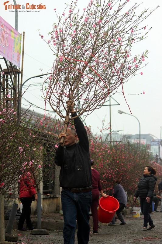 Anh: Cho Quang An tran ngap hoa dao ngay can Tet Nguyen dan 2019-Hinh-8