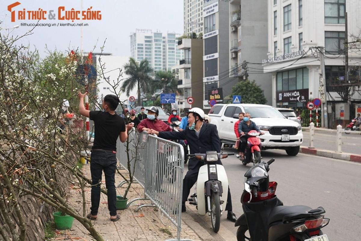 Sau Tet, hoa le vung cao xuong pho Ha Noi... het gia 7 trieu/canh-Hinh-11