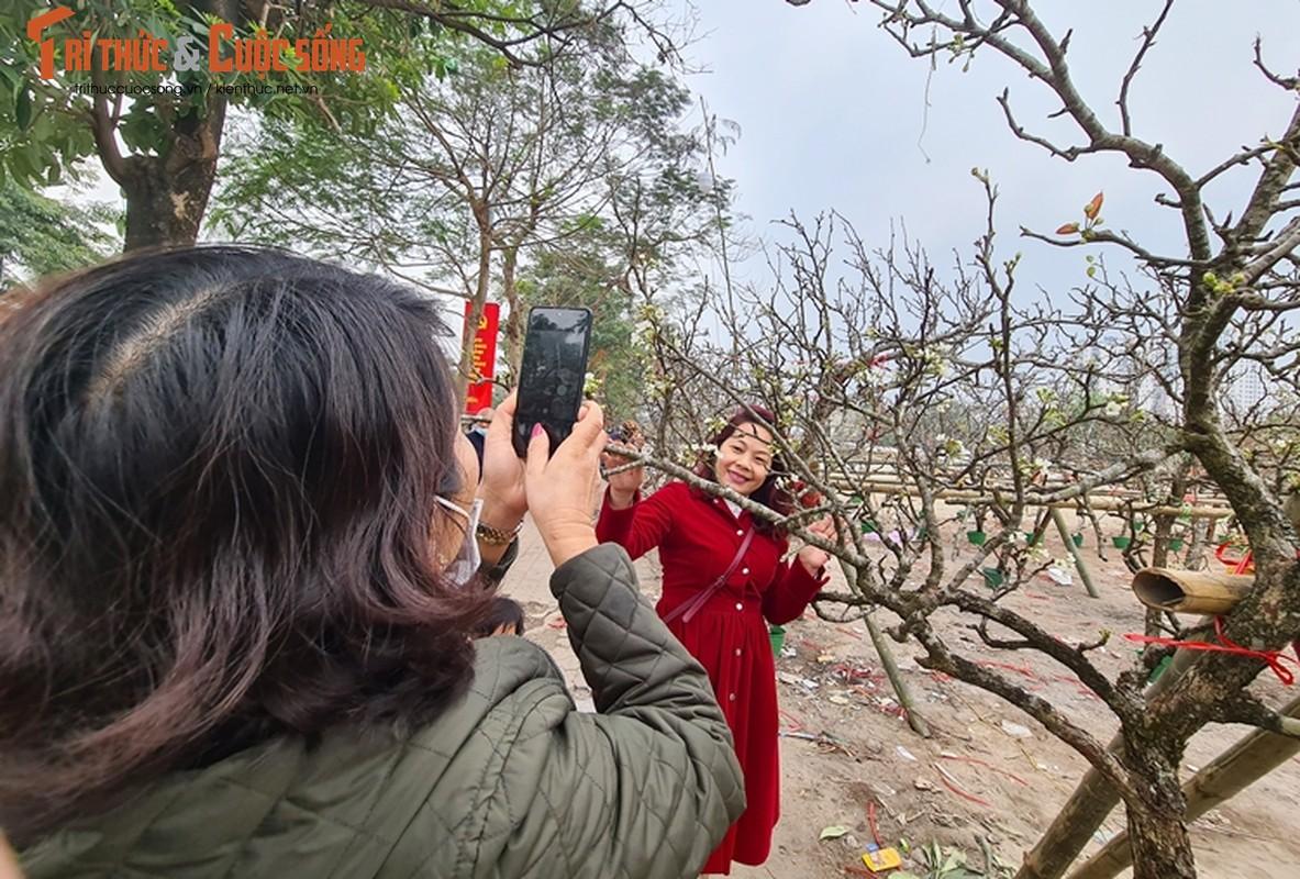 Sau Tet, hoa le vung cao xuong pho Ha Noi... het gia 7 trieu/canh-Hinh-15