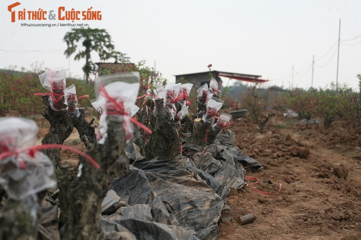 "Dao Nhat Tan nhon nhip ""ve vuon"" sau nhung ngay choi Tet-Hinh-10"