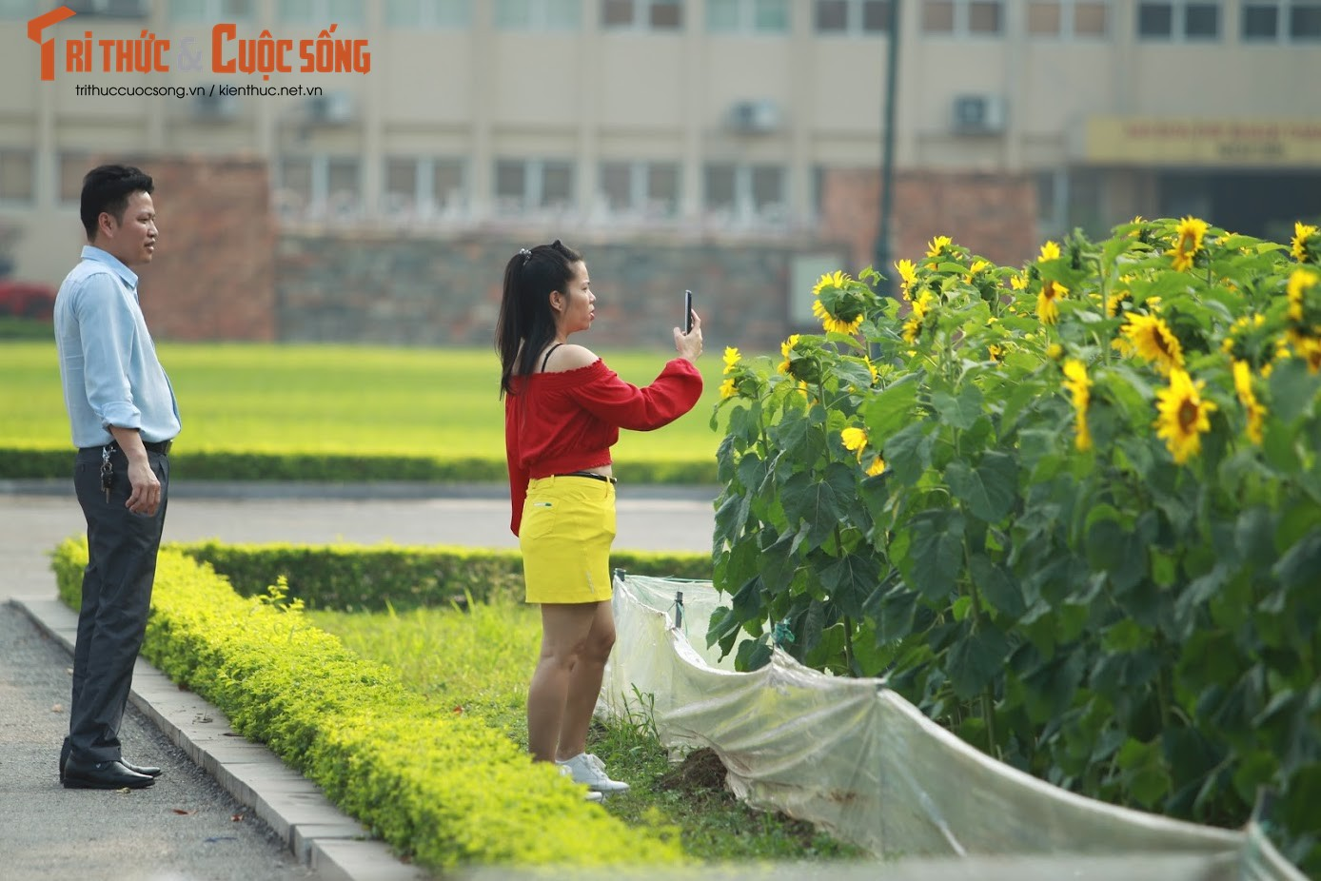 """Gioi tre thich thu """"check in"""" tai vuon hoa huong duong """"gay sot"""" o Ha Noi-Hinh-5"""
