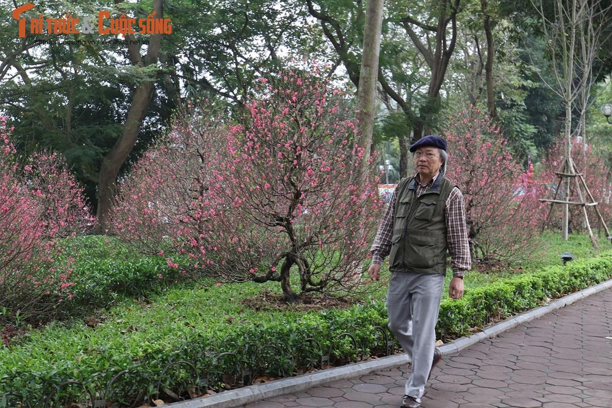 Duong pho Ha Noi rop co hoa tung bung chao don nam moi 2020-Hinh-8