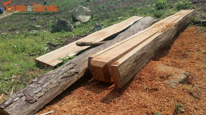 Son La: Tan mat xem lam tac pha rung Chieng Khua-Hinh-2