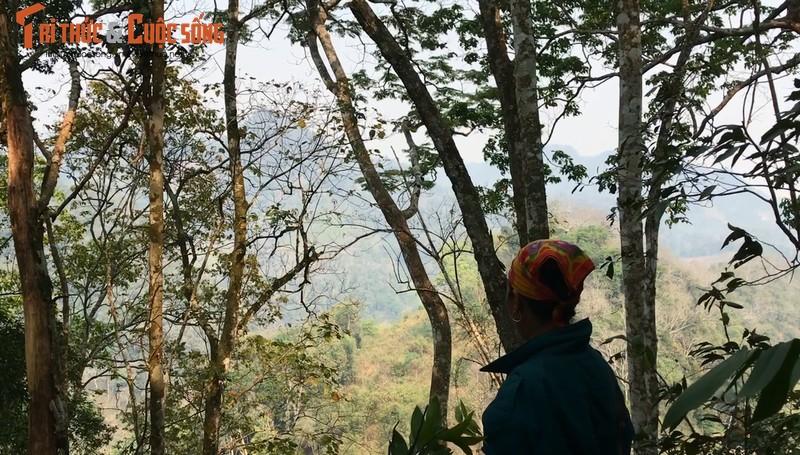 Son La: Nhan dien lam tac ngang nhien pha rung Chieng Khua-Hinh-2